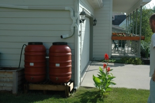 The convention rain barrel setup.