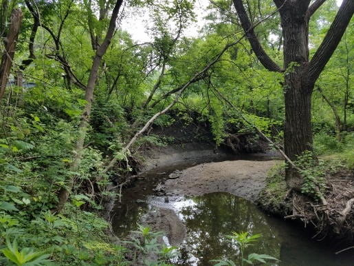 Before- Over time, flashy stream flows have caused large amounts of bank erosion