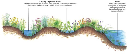 Cross-section, stormwater wetland.