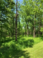 After fall invasive species removal the following spring