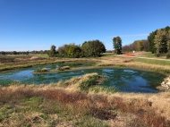 Fall 2018 - wetland vegetation is established.