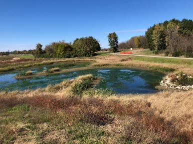 Fall 2018 - native wetland vegetation is established