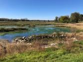 Fall 2018 - native vegetation is established