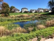 Fall 2018- Native vegetation is established